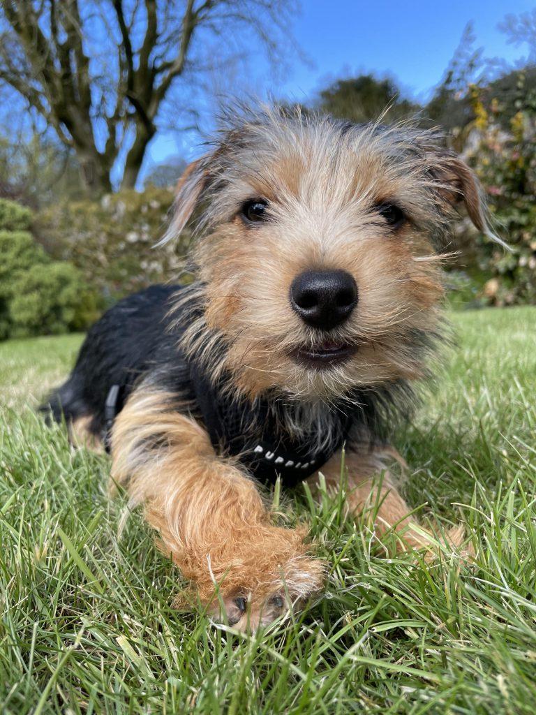 Andy Elwood's puppy Bonnie
